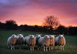 Image result for free pics of heal my sheep